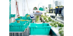 Cincoze DS-1002 Improves Automated Process for Asparagus Sorting image